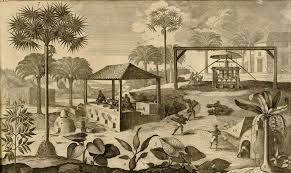 American Rum: Martinique